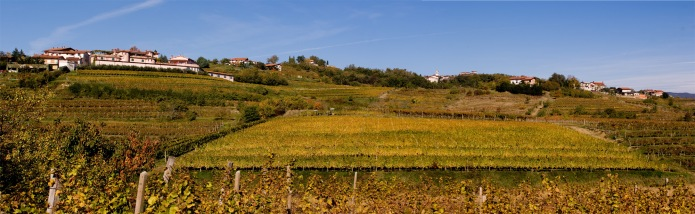 vineyards_0