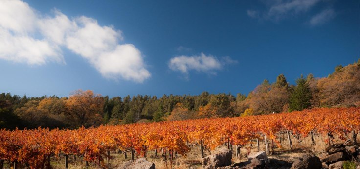 Vineyard-Image-1
