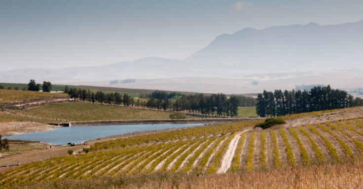 the-sadie-family-vineyards-the-swartland-region-western-cape-south-africa.jpg